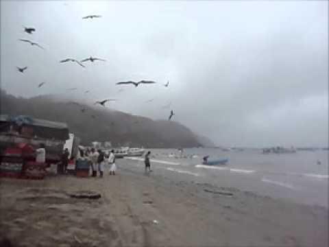 Fragatas em Puerto Lopez – Equador
