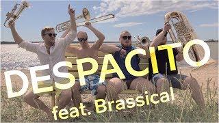 Brassical - Despacito(Luis Fonsi Cover)