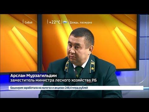 Интервью замминистра лесного хозяйства РБ Арслана Мурзагильдина на телеканале ГТРК