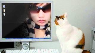 cat meoww sounds ringtone