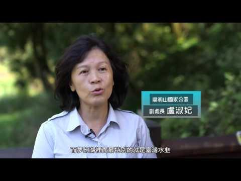 活化石植物 臺灣水韭 - YouTube