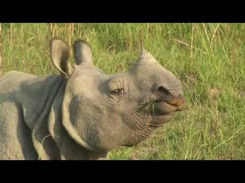 Insight Reisen: Nepal Chitwan Nationalpark