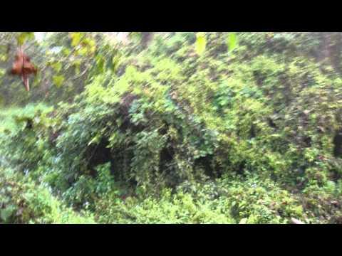 ネパールのエレファントサファリ Elephant Safari Nepal