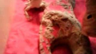 Smirnoff eating a cricket