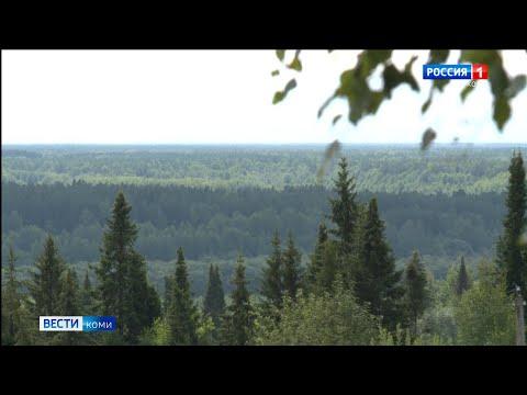 В Республике Коми ожидают большой урожай еловых семян