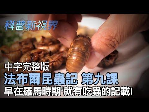 激昂的生命   羅馬時期、二戰糧荒,都有以昆蟲佐菜的紀錄! 而今天就用台灣的昆蟲料理讓大家大飽口福!!【法布爾昆蟲記 第九課】全片線上看 - YouTube