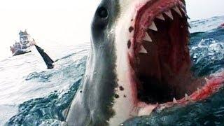 Naked Science - Shark Attacks