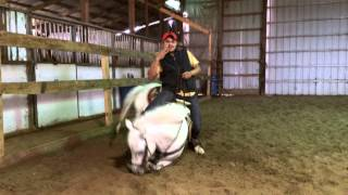 Salinas Horsetraining LLC  Video #2