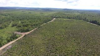 Forest Cover Loss in South Central  New Brunswick : Goshen Plantation