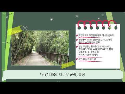 [문화재청 대학생기자단] 천연기념물로 지정 예고된 담양 태목리 대나무 군락! 알고 계셨나요?