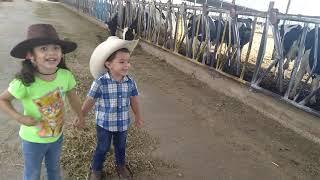 En el rancho la vaca Lola