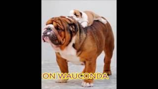 Wauconda High School Fight Song