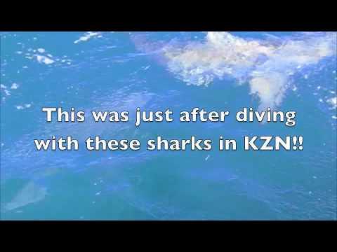 KZN Sharks
