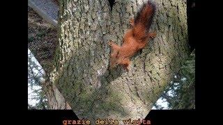 due_scoiattolini_in giardino