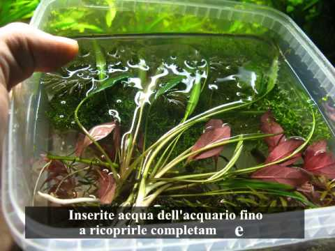 Come potare le piante d 39 acquario fai da te mania - Costruire mobile acquario ...