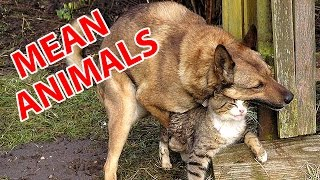 Hilarious mean Animals