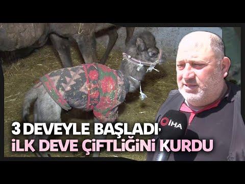 Türkiye'nin İlk Deva Çiftliği Denizli'de Kuruldu