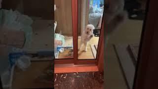 권투에 소질이 있는 강아지