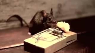 Video motivacional - História motivacional do Ratinho