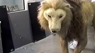JUMANJI (1995) Featurette Animatronic Lion