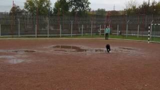 Training für Blindenhunde im Gefängnis Miskolc