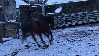 Horses gallop into snow and say no