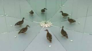 Larytta - Souvenir de Chine - video directed by körner union