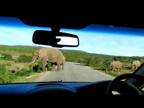 Addos Elephant Safari – Port Elisabeth – South Africa