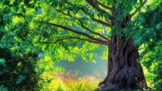 3 HOURS Relaxing Celtic Fantasy Music | Fairy Tale | Background for Relax, Dream, Massage, Study