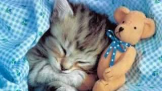 SShhh!!  Sleeping animals! (Please read Description)