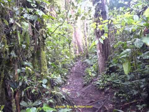 2012 Ecuador   Puyo, Rescate Los Monos, La Forêt Amazonienne, Selva Amazonica
