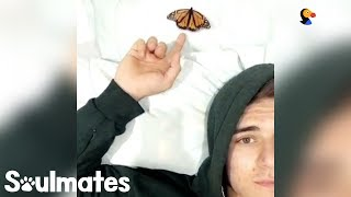 Guy Becomes Best Friends With A Butterfly | The Dodo Soulmates width=