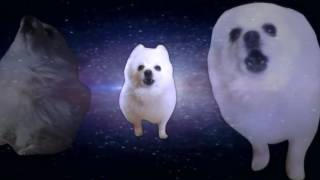 Shooting Stars Gabe the dog
