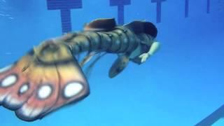 Mertailor Lobster Mermaid Tail
