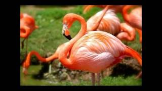Top 10 Beautiful Birds In World