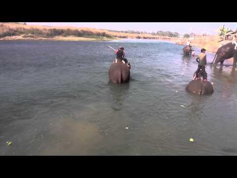 Elephant Bathing Chitwan National Park Nepal