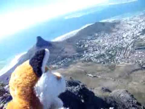Foxy Enjoying Table MountaIn
