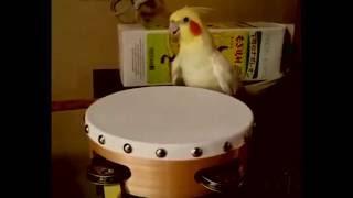 Whiplash Bird