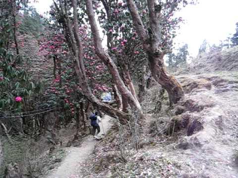 Nepal Yak.AVI