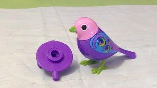 Brinquedo Digibirds - Pássaro Eletrônico Musical Cantante