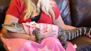 The World's Most Pampered Alligator: BEAST BUDDIES