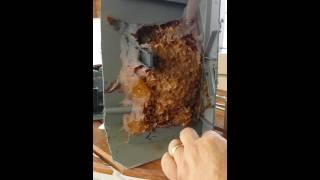 Transferência da abelha jatai da caixa de som para caixa inteligente  1