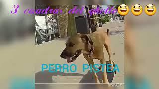 EL PERRO DE DUKI Y NEO(Video Official)