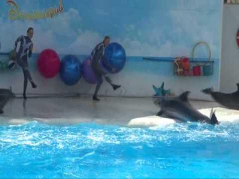 Коктебельский Дельфинарий 2012 г.