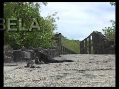 Ecuador. Galápagos. Isla Isabela