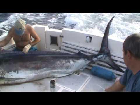 Pesca Deportiva en Salinas Ecuador 2011 con Lobo de Mar – Guia de pesca Eduardo Cañueto.mpg