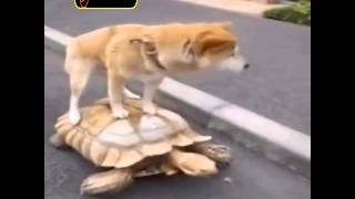 Dog Riding Turtle : The fast and furious 7