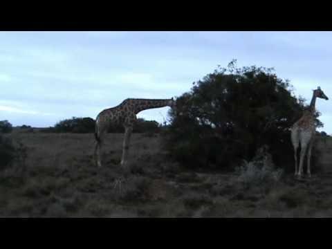 Experience Shamwari Game Reserve