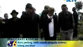 Kacang koro Pedang on SCTV
