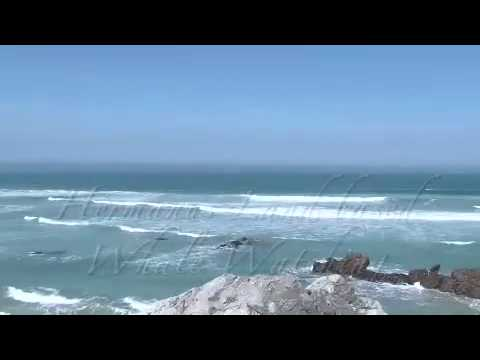 Hermanus Land Based Whale watching South Africa